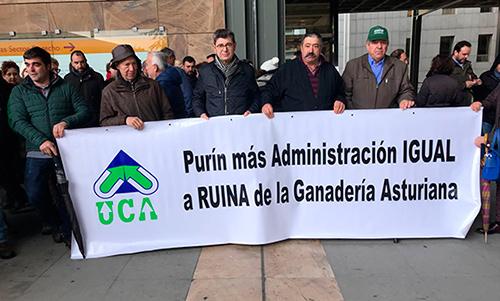 Más de 1.500 ganaderos desafiaron a la lluvia esta mañana durante la manifestación en Oviedo que les llevó desde la Consejería hasta la Junta General del Gobierno de Asturias. Foto:UPA.