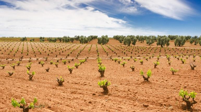 UPA-UCE pide prorrogar el plazo para contratar seguros agrarios por el coronavirus