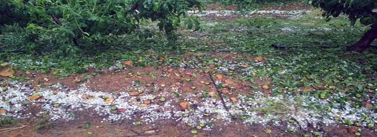 El pedrisco y las lluvias torrenciales arruinan las cosechas en Extremadura