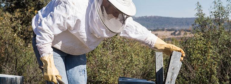 UPA alega contra el decreto del etiquetado de la miel por considerarlo 'insuficiente'