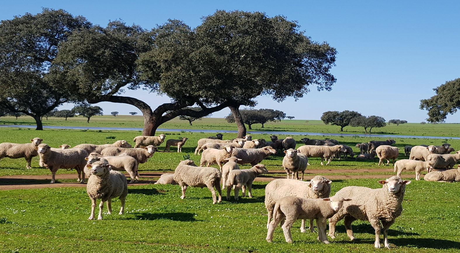 La ganadería no está a salvo de los efectos del coronavirus: miles de ganaderos afrontan la ruina por el cerrojazo de la hostelería