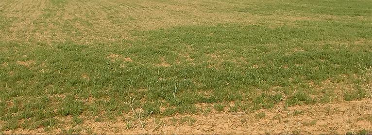 UPA alerta de las graves consecuencias de la sequía que asola el país