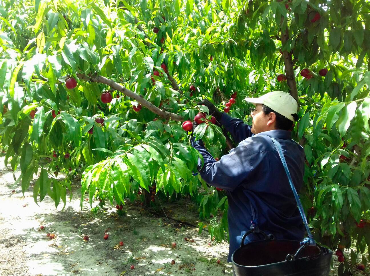 UPA-UCE considera que los presupuestos regionales presentan 'luces y sombras' para el sector agrario