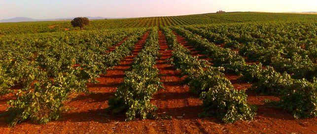 Sorpresa e indignación: La Unión se personó a favor de las restricciones de cava a los agricultores extremeños