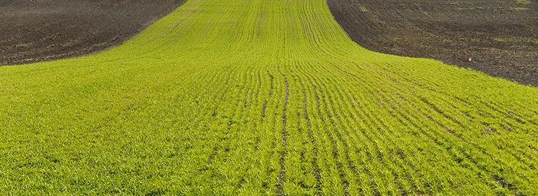 UPA pide a Tejerina que defienda a los agricultores y ganaderos familiares en la mini-reforma de la PAC