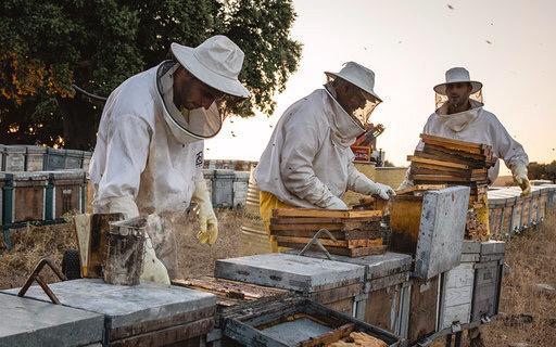 """Los apicultores extremeños se plantan: """"Un etiquetado correcto evitaría mezclas con nuestra miel"""""""