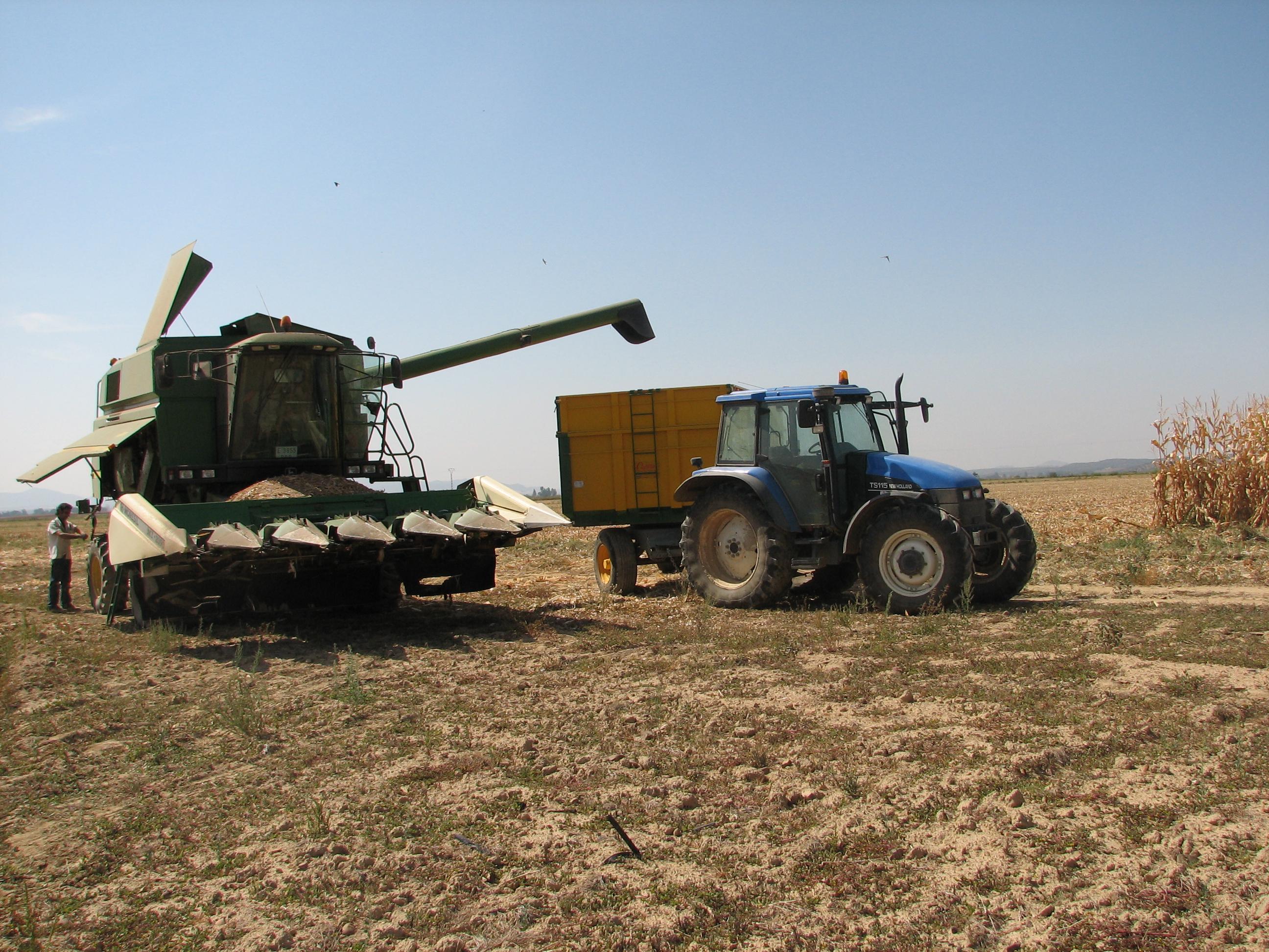 UPA-UCE recomienda almacenar el maíz ante la especulación de precios