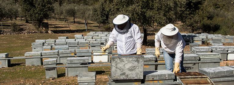 UPA-UCE pide a las administraciones y al sector 'un frente común' ante el problema sanitario en la apicultura