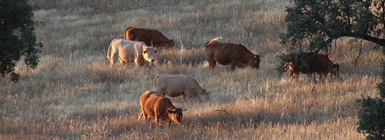 UPA espera que el plan de control de la fauna salvaje ayude a frenar la tuberculosis